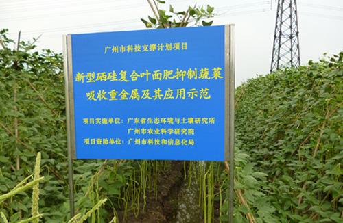 广东省增城市农场水稻重金属控制技术示范