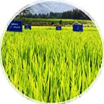 受污染耕地安全利用项目