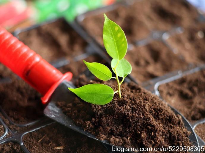 哪些土壤可以进行土壤性能改良