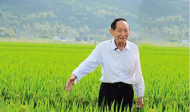 """农业的福音""""盐碱地""""种植水稻试验成功水稻命名为""""海水稻"""""""