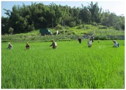 广西稻田土壤重金属污染控制示范技术