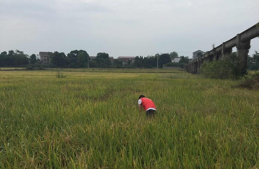 农田土壤修复案例分享