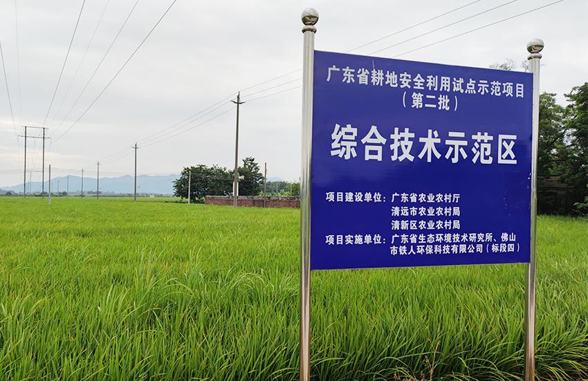 2020年清远市清新区受污染耕地安全利用试点示范