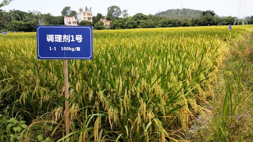 2020年佛山市三水区农业农村局三水区受污染耕地安全利用项目